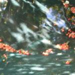Le temps des cerises pour un bassin